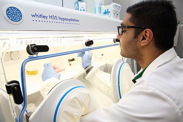 Many Canadians are unaware stem cells were first discovered in Ontario. This entire field of science began right here, more than 50 years ago, and our province's researchers – including many here at Western – are still consistently ranked among the world's best, including master's candidate Joban Dhillon.